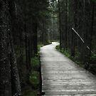 Spruce Bog Boardwalk Algonquin by BonnieToll