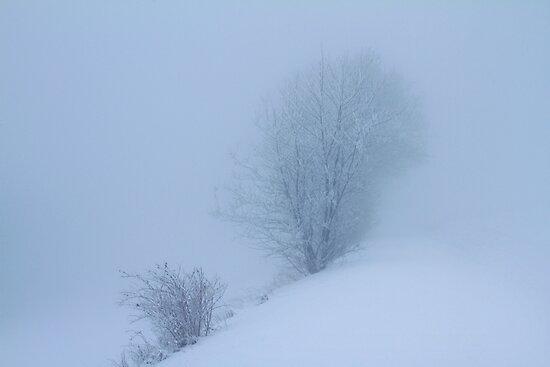 Blue Fog  by Angelika  Vogel