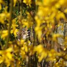 Tabby cat looking through yellow flowers by turniptowers