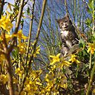 Tabby cat licking lips in garden by turniptowers
