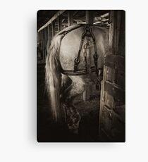 PERCHERON DRAFT HORSE Canvas Print