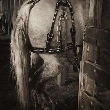 PERCHERON DRAFT HORSE by TheresaTahara