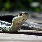 Garter Snake by BonnieToll
