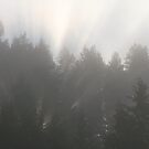 Fog Through The Trees by Kathi Huff