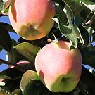 Apples Ready by Kathi Huff