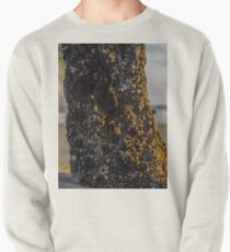 Barnacles scapes Pullover