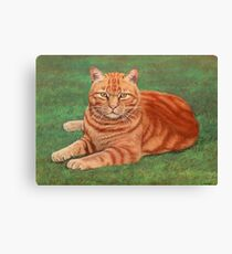 Red Tabby Canvas Print