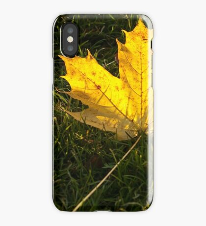 A fallen maple leaf in the sun iPhone Case/Skin