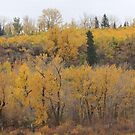 Fall Colours by Kathi Huff