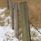 Fence Posts by Kathi Huff