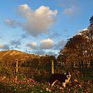 Autumn in Llanfairfechan. by Michael Haslam