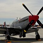 Red Nosed Mustang by Bob Moore