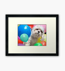 Attack of the Killer Balloons - Fun Maltese Dog Portrait Framed Print