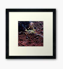 Lava Rock Flowers Framed Print