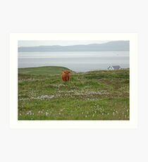 Islay Coo Art Print