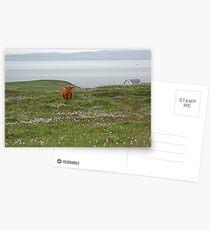 Islay Coo Postcards