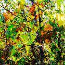 Autumn Birches by TaiChiJohn
