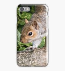 Squirrel On the Hunt iPhone Case/Skin