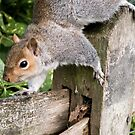 Squirrel On the Hunt by Pat Scullion