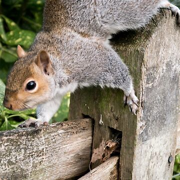 Squirrel On the Hunt by squage