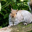 Happy Squirrel by Pat Scullion