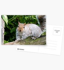 Happy Squirrel Postcards