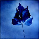 The leaf - blue by Ronny Falkenstein