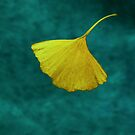 Ginko by Ronny Falkenstein