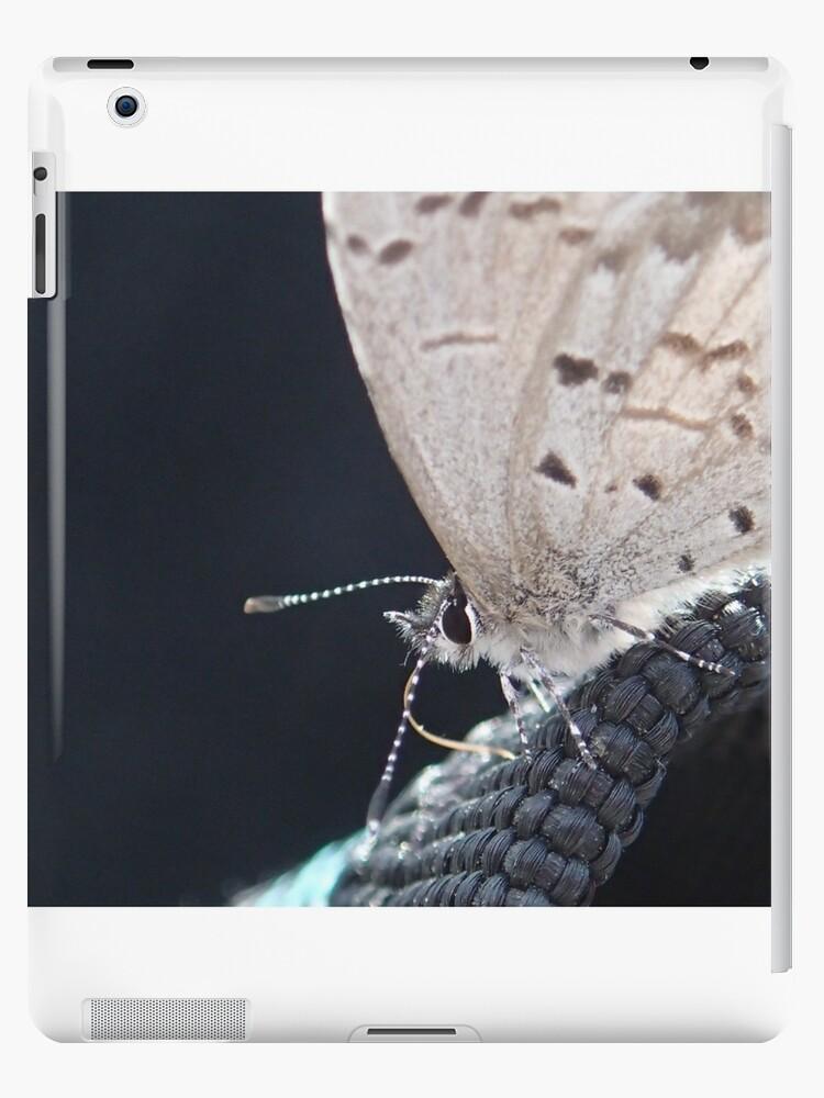 Butterfly Macro by CodyWilliquett