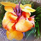 Orange Canna - my garden by EdsMum