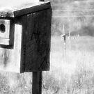 Eastern Bluebird Habitats by BonnieToll