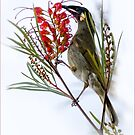 honeyeater by carol brandt