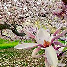Magnolia Forest by TaiChiJohn