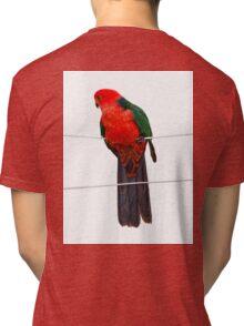 king parrot Tri-blend T-Shirt