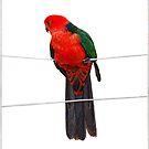 king parrot by carol brandt