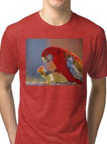 crimson rosella Tri-blend T-Shirt