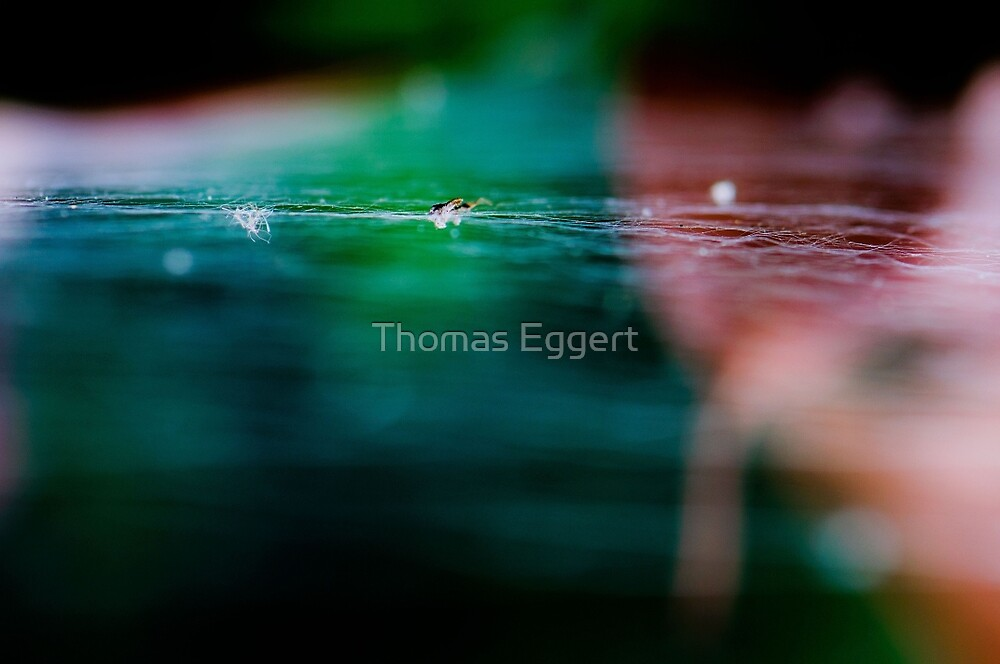 WEB by Thomas Eggert