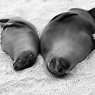 Sea lions on a beach by Michael Stiso