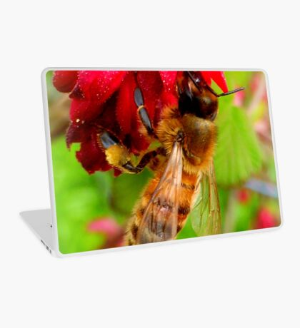 Bee on Jostaberry flower Laptop Skin