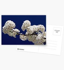 Blossoms In Blue Postcards