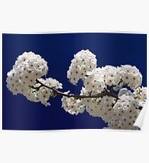 Blossoms In Blue Poster