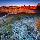Fall Foliage and First Frost Cape Cod by Artist Dapixara