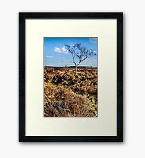 Lone Tree Peak District Derbyshire Framed Print