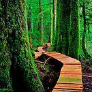 Rainforest Walk by TaiChiJohn