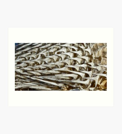 Pufferfish skeleton Art Print