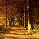 Path in Autumn Forest by ienemien
