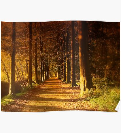 Path in Autumn Forest Poster