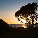 Sunrise Silhouette  by Darren Clarke