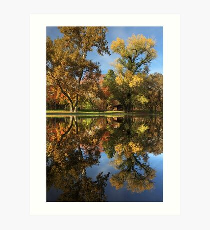 Sycamore Pool Reflections Art Print