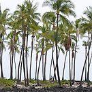Hawaii  by lostpineslife